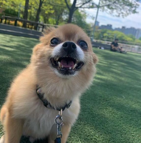 Dog Walking Tips & Advice