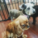 Piper and rainbow enjoying a relaxing day at Newyorkdognanny nycdogshellip
