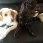 So Adorable! Newyorkdognanny dogsofinstagram nycdogs goingbananas