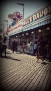 coneyislandnycdogadventures