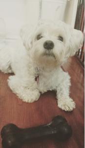 puppystaynyc