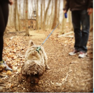 Favorite Shaded Trails for NYC dogs in Upstate NY