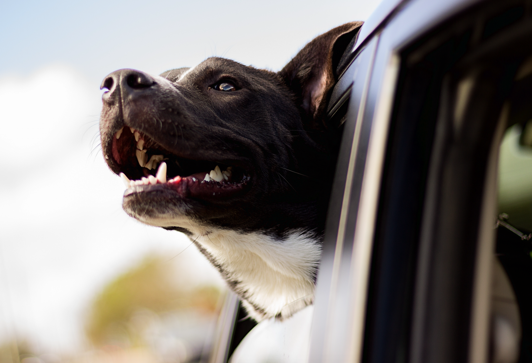 How To Transport Your Pet In and Around NYC Hassle-Free