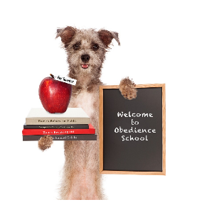 Dog Training Near Me: How To Find The Best Dog Training Schools