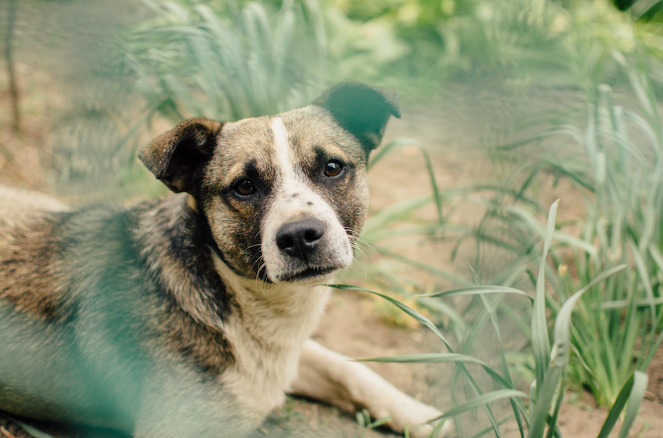 How to Keep Fido Safe and Happy on Your Lawn