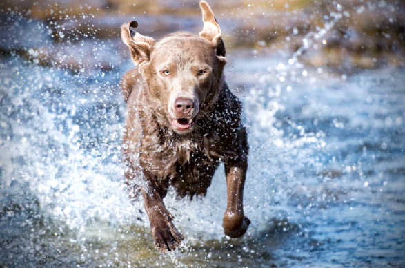 How to Make Sure Your Dog is Paw-sitively Safe Around Water