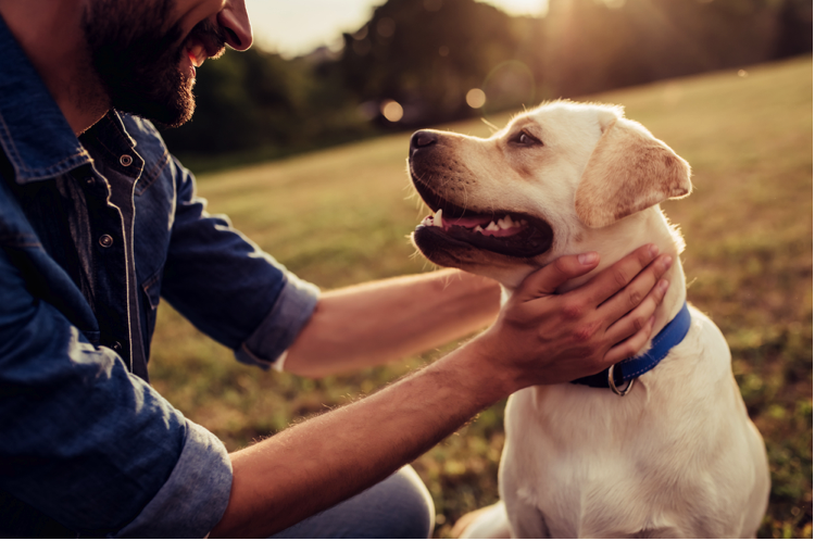 The Pros and Cons of CBD Oil for Dogs