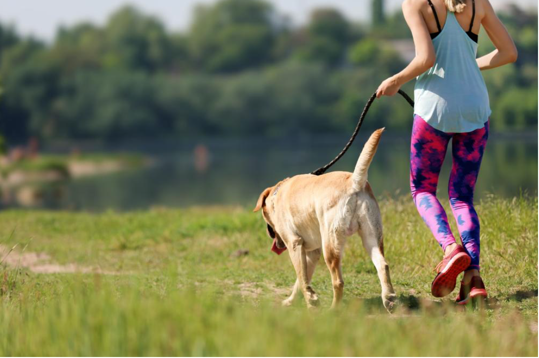 5 Simple Tips That Will Lengthen Your Dog's Life