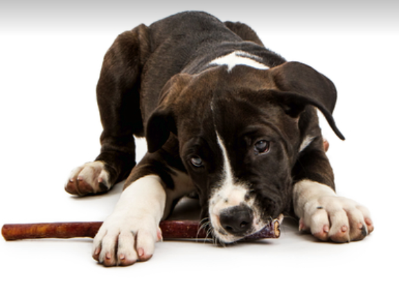 The Benefits Of Bully Sticks and How They Can Help Stop Unwanted Chewing