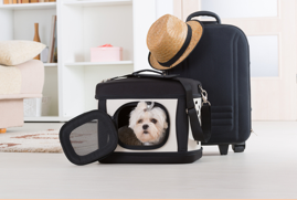 What To Consider When Buying A Pet carrier For Air Flight
