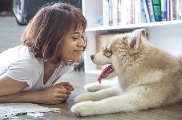 Pet Vaccinations Prolong Animal Life