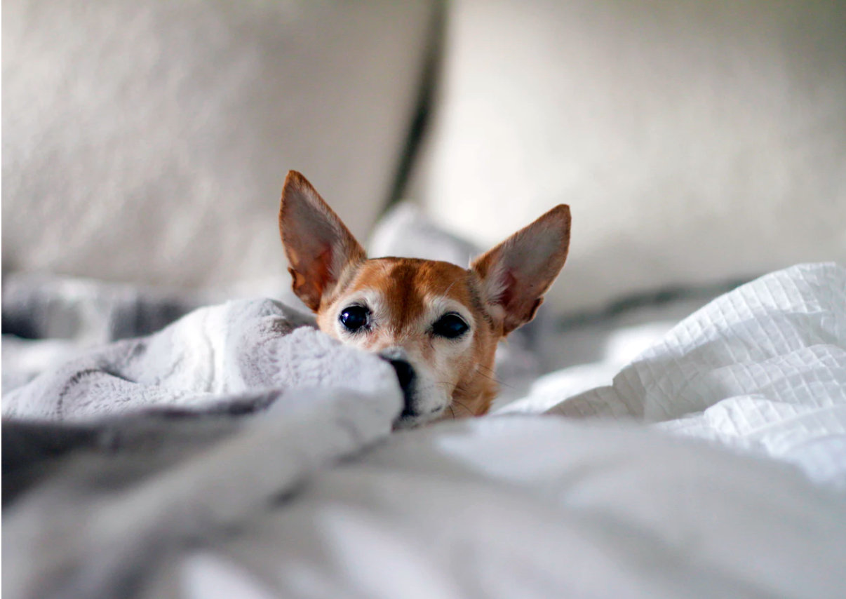 7 Tips for Pet Parents Looking Into Pet Insurance