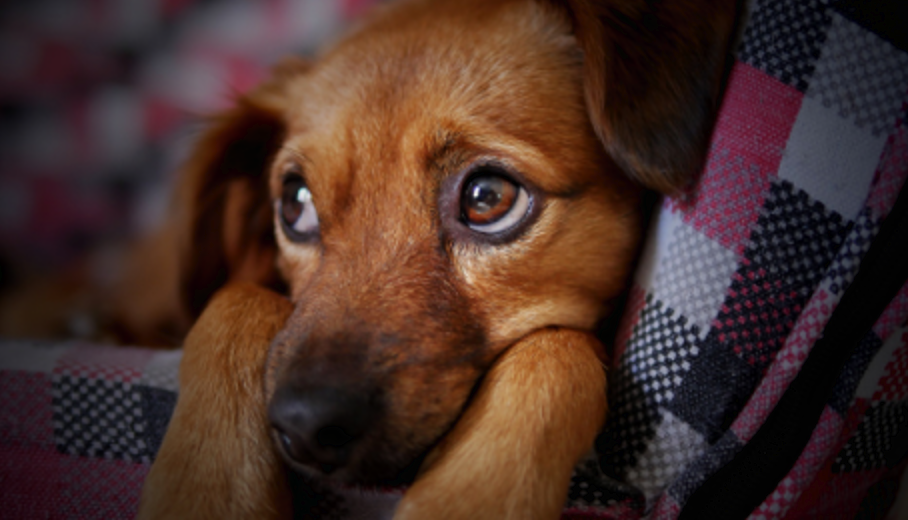 Common Behavioral Problems and Solutions for Rescue Dogs