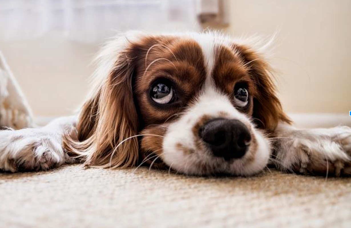 Moving Forward: Tips on Dog Care While Relocating for a New Job