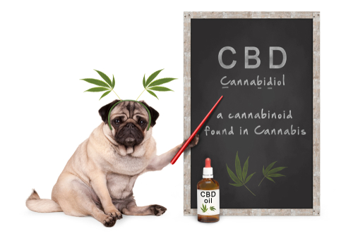 Charlottes Web CBD Oil Review: Pros and Cons of Using the Product