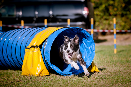 6 Simple Tips To Make Your Garden Dog-Friendly