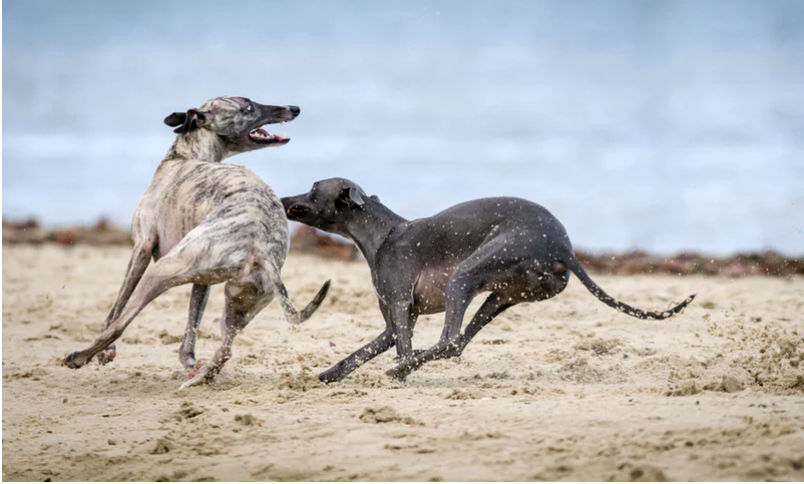 Effective Tips to Prevent Chasing Behavior in Dogs