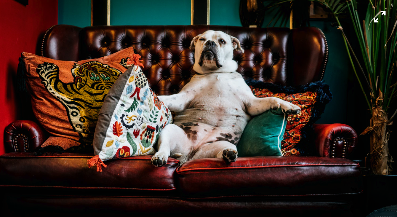 How to Choose a Dog Hotel