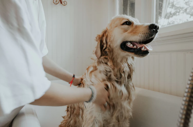 What You Need to Know About Dog Grooming