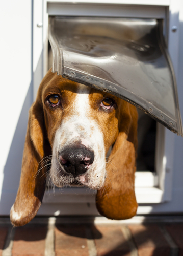 7 Security Tips If You Are Using Doggy Doors