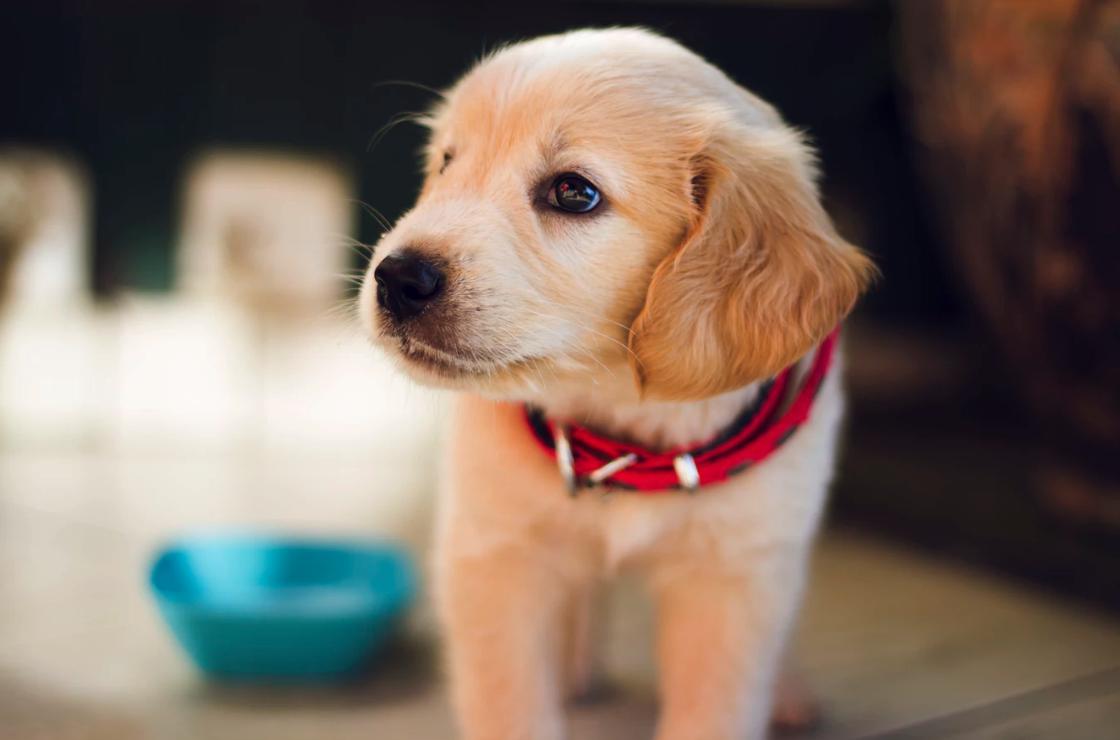 Dog Training: No Longer a Mystery