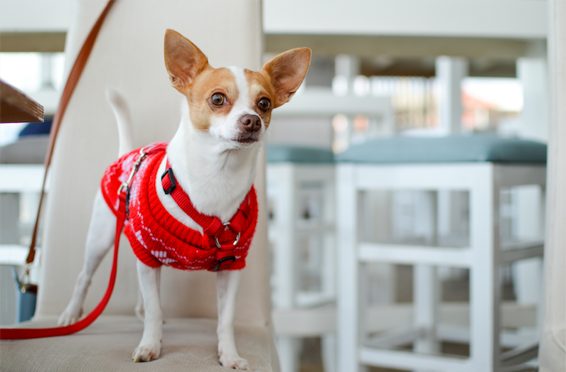 A First-Time Dog Owner? Here Are the NYC Essentials