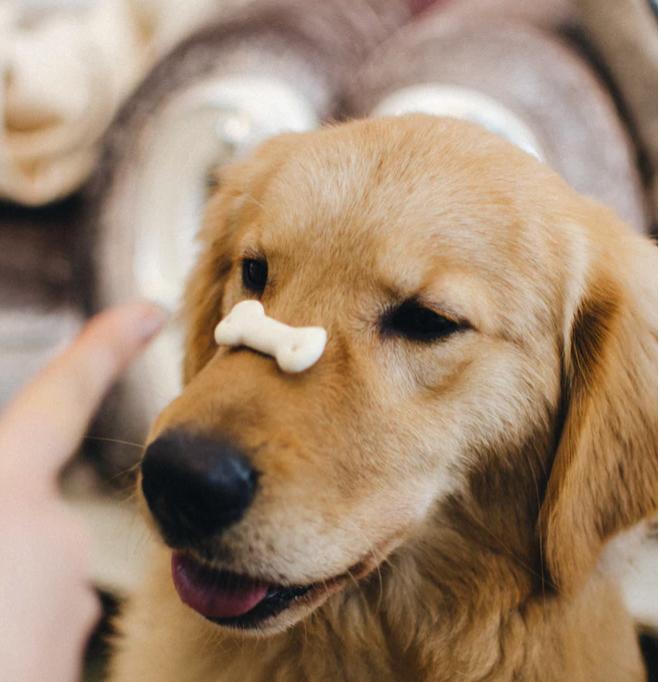 Making CBD Oil Treats Your Dog Will Love