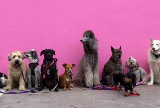 Local NYC Dog Socialization Calander March 2019