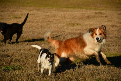 Don't Make These Faux-Paws at Your Local Dog Park