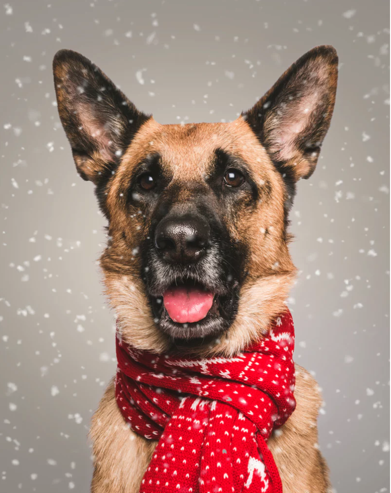 Everything You Need to Know About Your German Shepherd Doghttps://www.newyorkdognanny.com/new-york-dog-nanny-site-blog/everything-you-need-to-know-about-your-german-shepherd-dog/