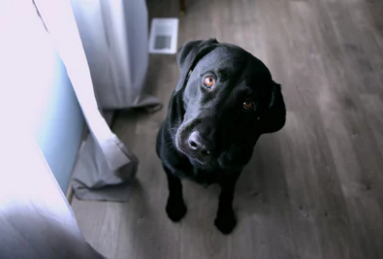 5 Steps For Writing Good Pet-Sitting Instructions