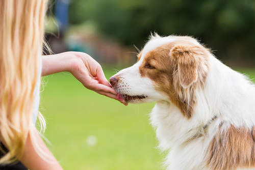 The Benefits Of Dog Treats When Training Your Pet
