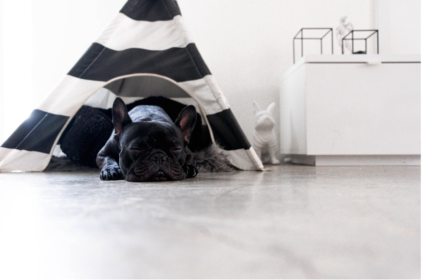 Top 5 Tips for Getting Your Dog to Succeed on Social Media