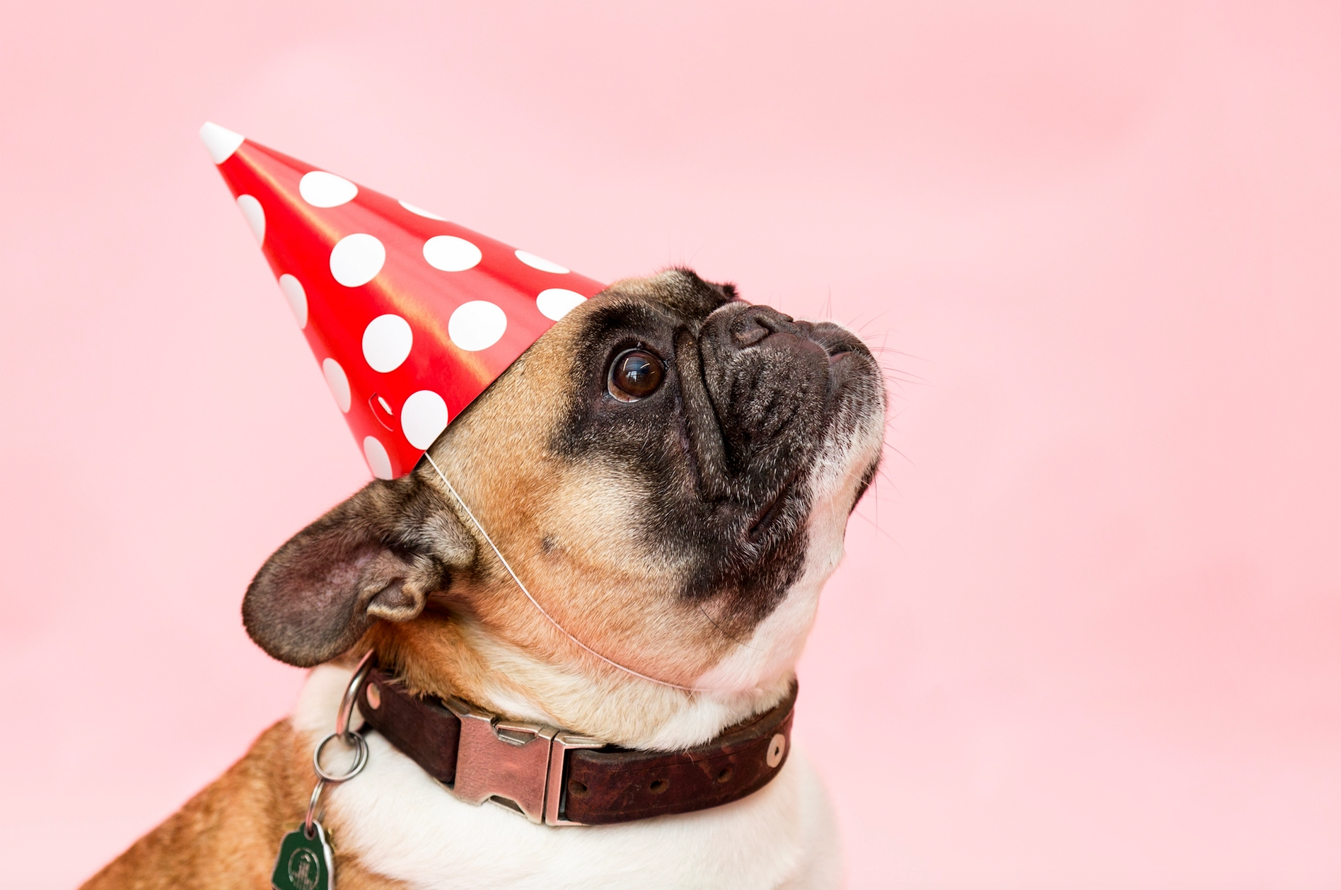 Tips To Keep Your Dog Safe During A Party