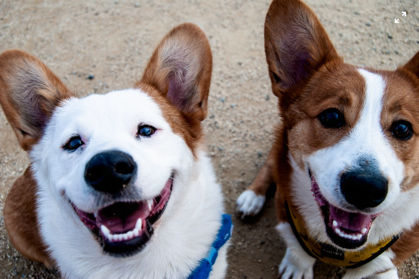 Importance of Socializing Your Dog and How It Can Benefit Owners in Non-traditional Ways