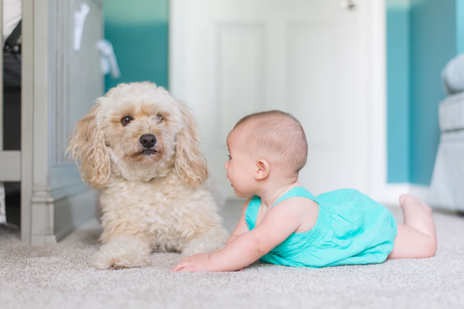 7 Essential Tips To Keep In Mind When Introducing Your Dog To Your New Baby
