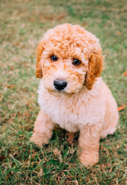 Get Almost Any Haircut for Your Pup By Doing This