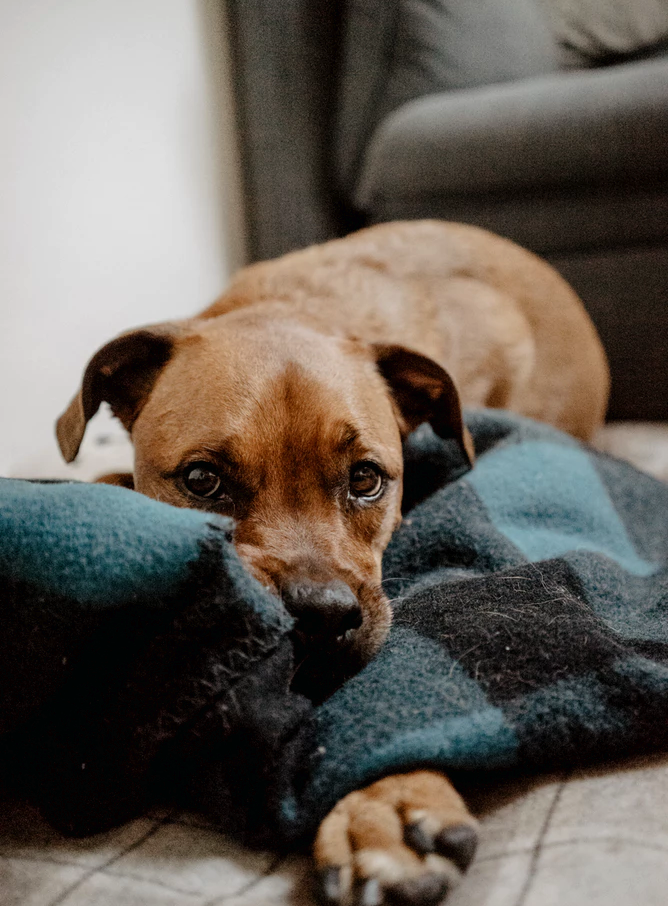 How CBD Can Increase the Appetite of Your Dog and Help With Nausea