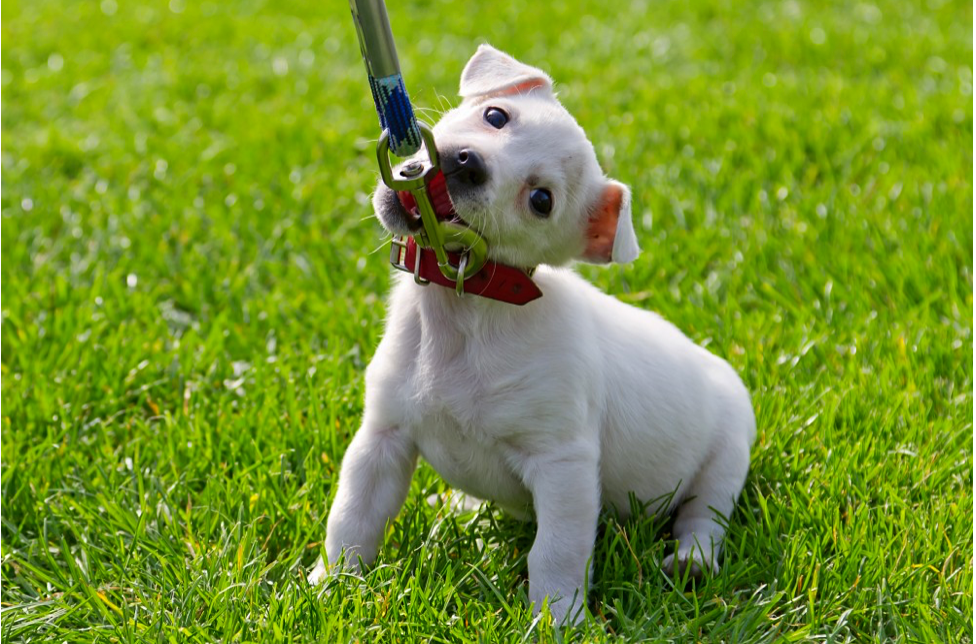 Does Your Dog Hate Walks? Get to the Bottom of It