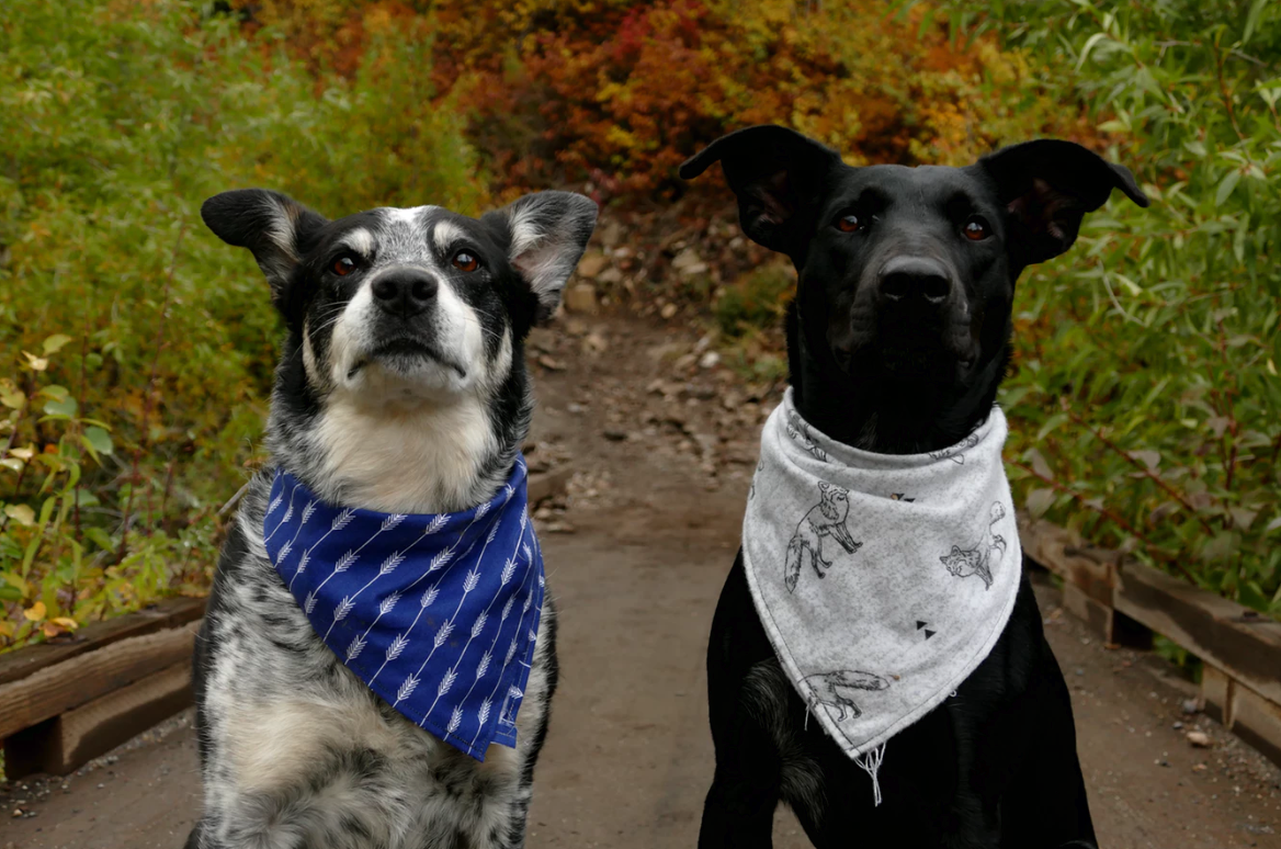7 Methods to Keep Your Dog Calm Around Other Dogs