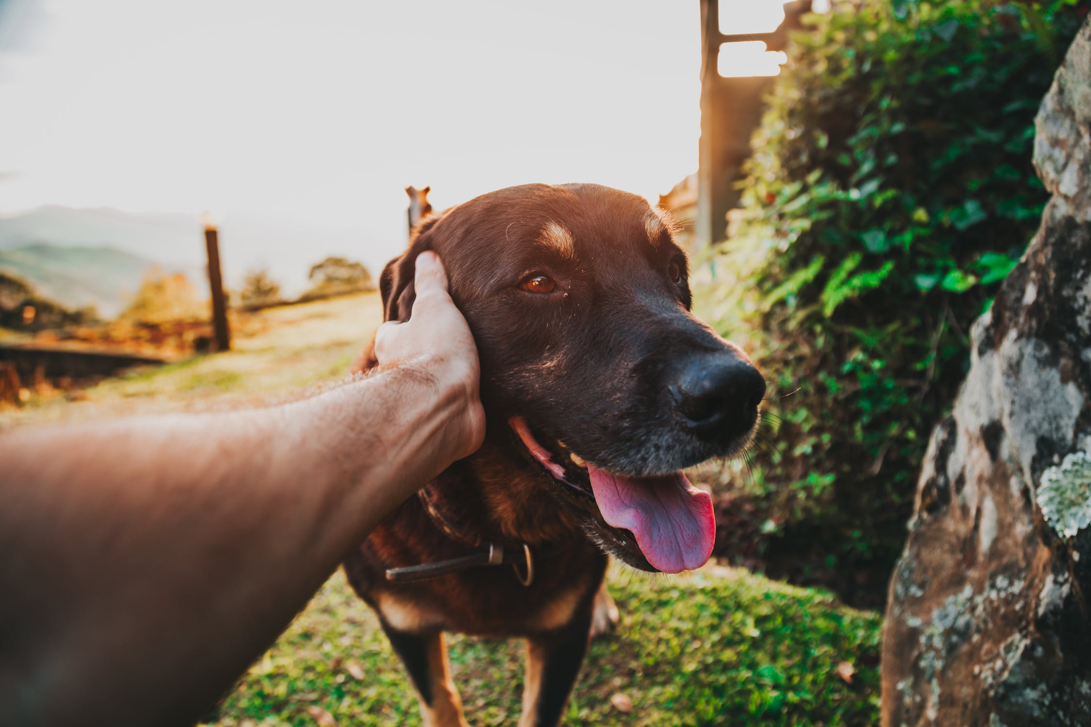 7 Clever Ways to Alleviate Dog Anxiety That You've Never Thought of Before