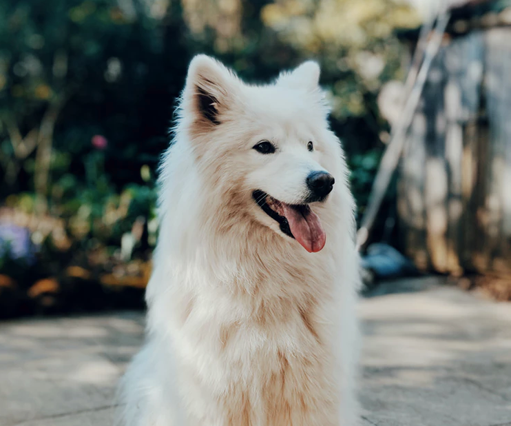 8 Ways to Understand If Your Dog is Happy