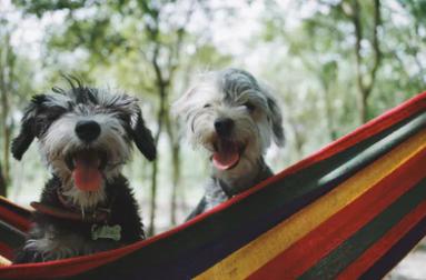 Male Vs. Female Dogs