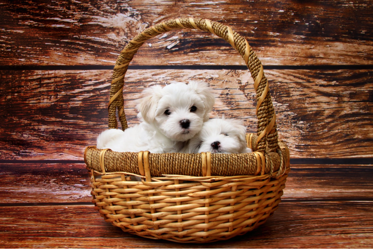 How to Pamper a Dog with Gift Basket?