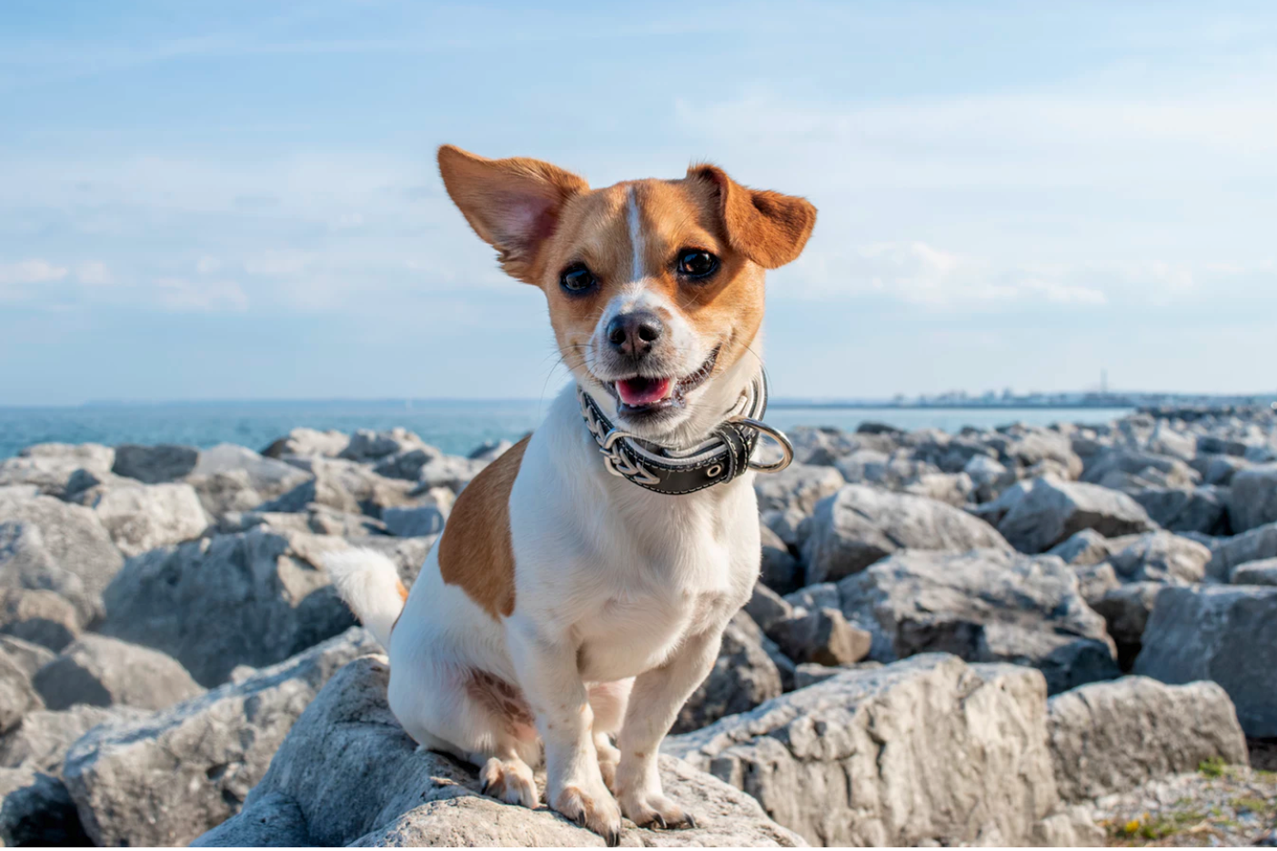 Harness Train Your Dog Easily with These 6 Quick Hacks