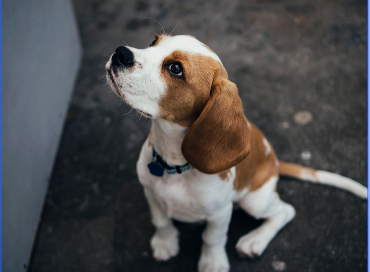 3 Ways to Help You and Your New Puppy Sleep