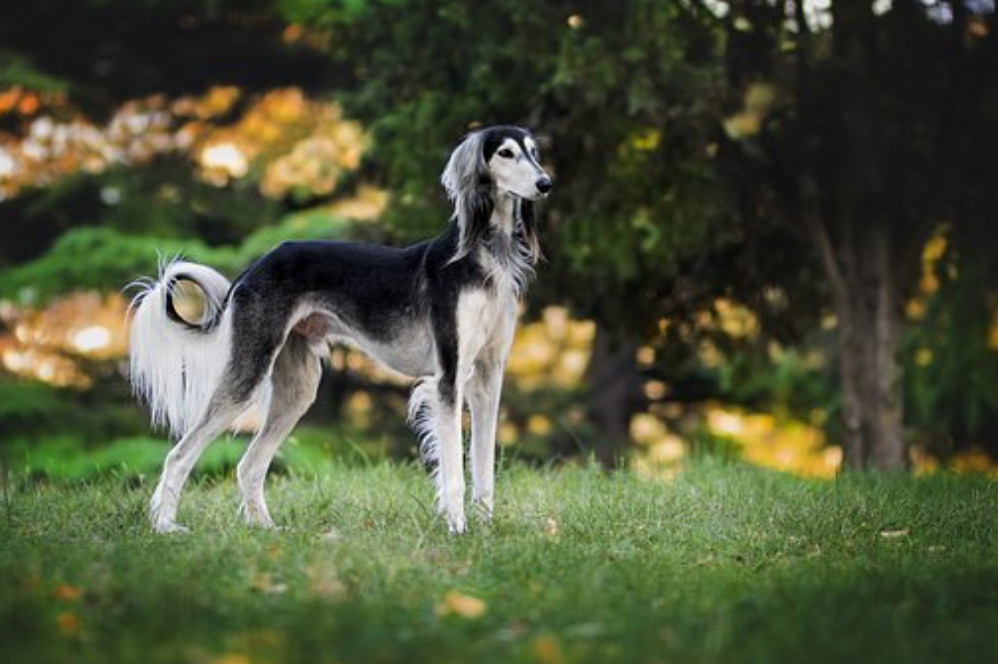 Tips for Preventing 5 Most Common Doggie Disasters