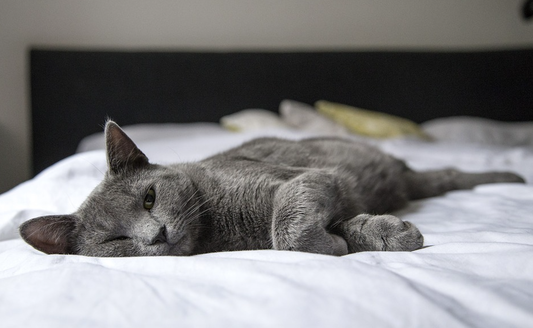 The Art of Keeping a House Clean and Beautiful with Amazing Pets