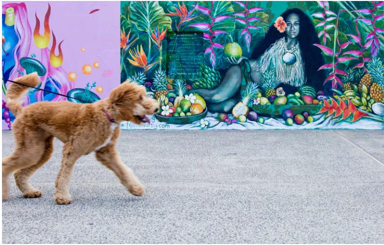 How to train a dog to walk on a leash beside you
