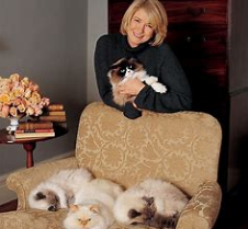 Tips For Pet Owners- How to Manage To Keep Their Furniture Hair-Free
